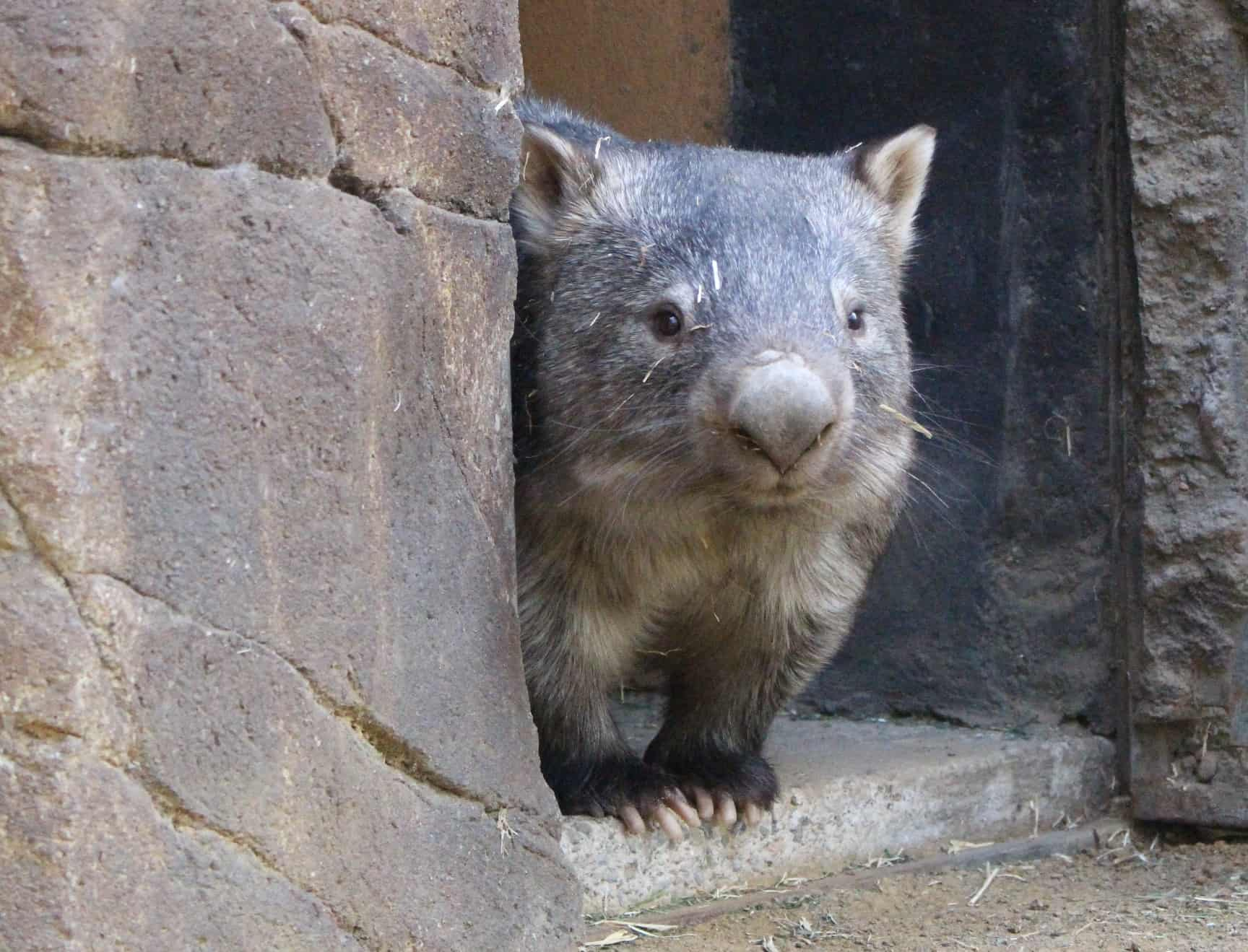 Milly the Wombat – lowres